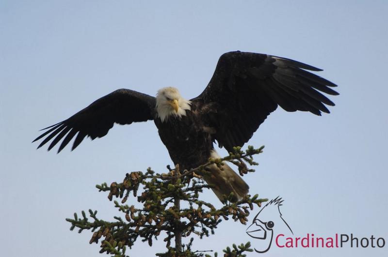@ CARDINAL PHOTO US2@