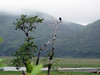 Bald eagles are fun to spot in Alaska
