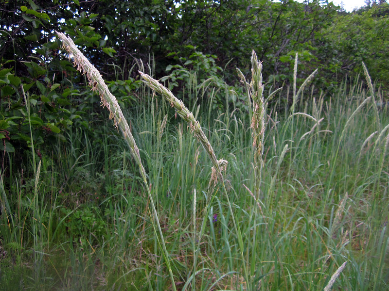 Tall grasses surround the beach