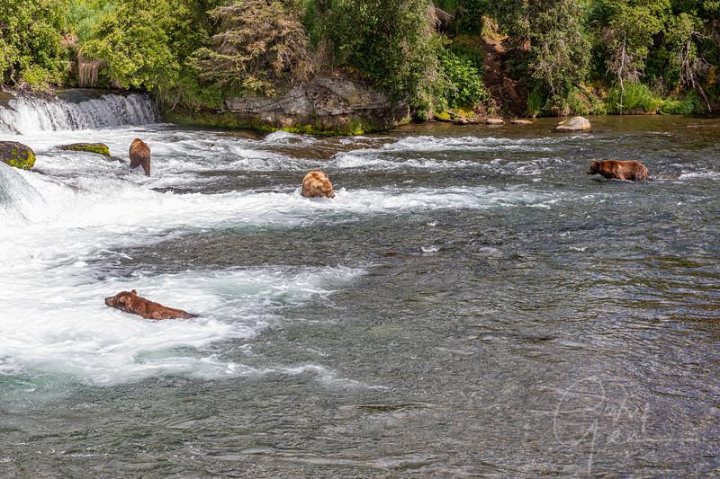 Brooks Falls, Katmai National Park, Alaska - Gathering of the bears