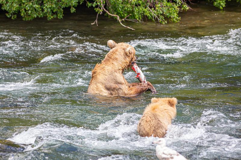 Mama bear is again successful!