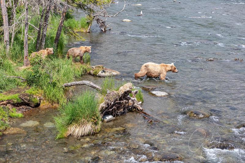 Mama Bear and 2 cubs