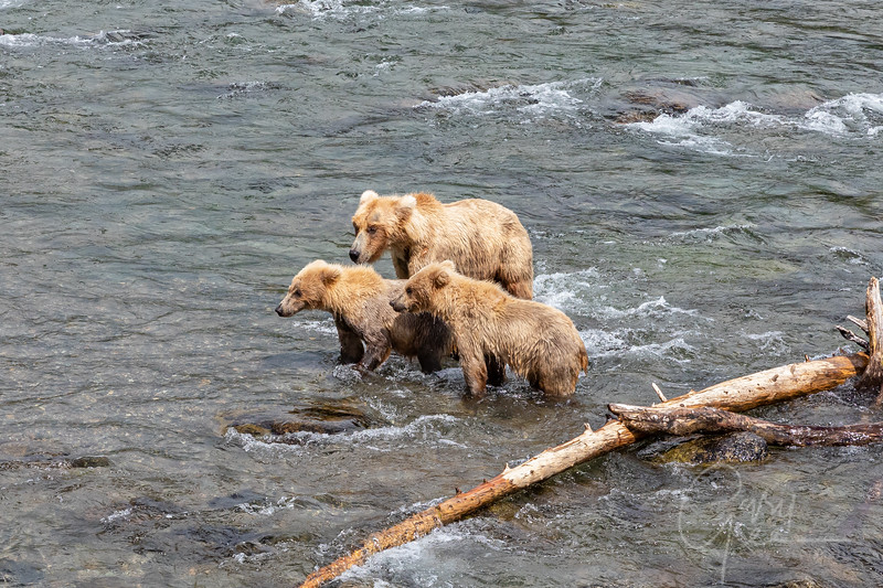 Mom and the two cubs again