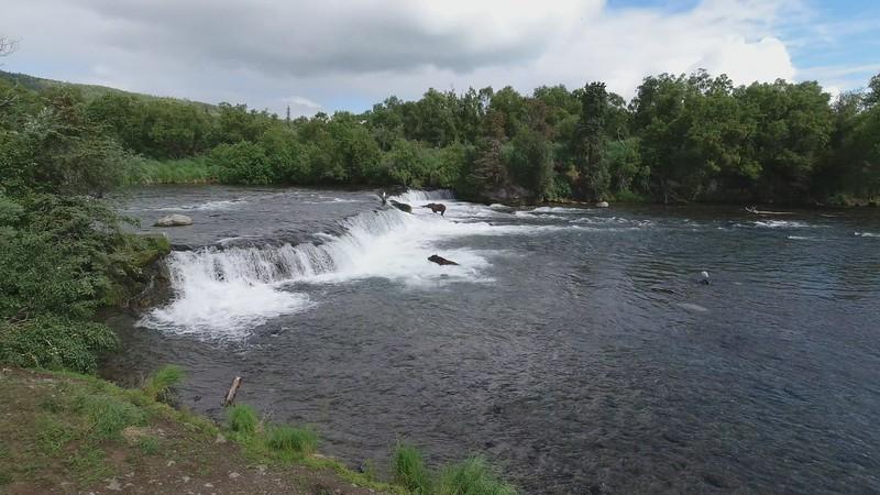 Video - Brooks Falls Platform on July 8th, 2021