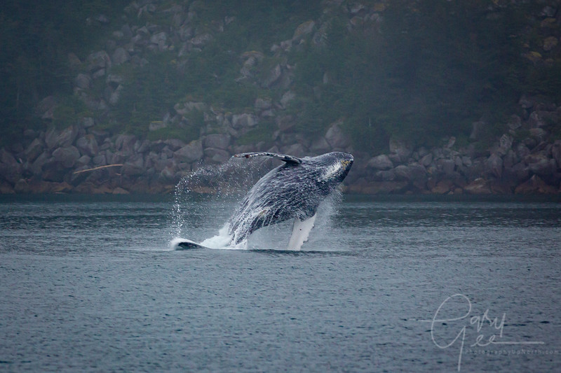 Oh my gosh! The next sequence of shots were of a Humpback whale breaching in Seward, Alaska.