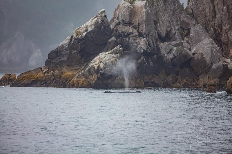 Humpback Whale drawing nearer