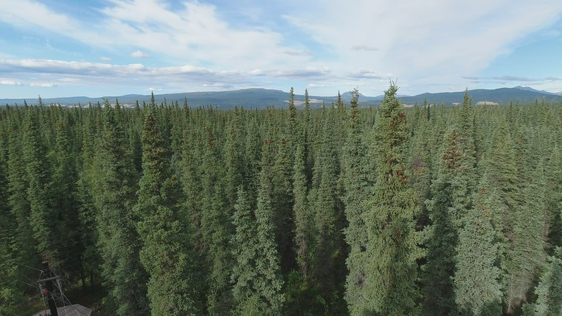 Video Panorama  Zip-Lining in Alaska