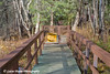 Trail Closed & Bear in Area signs at Liard Hot Springs along the Alaska Highway in Canada.<br /> October 2008