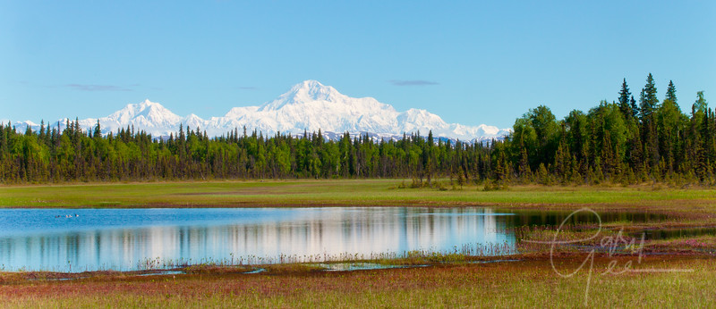 Denali - Mt. McKinley reflective view from the south in the early morning