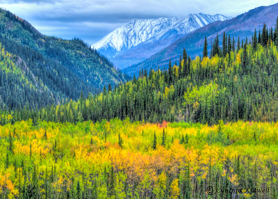 Fall landscape in Denali National Park