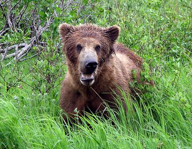 Goofy bear!