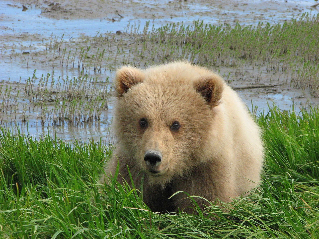 The cub was curious about us, the mom just walked by calmly.