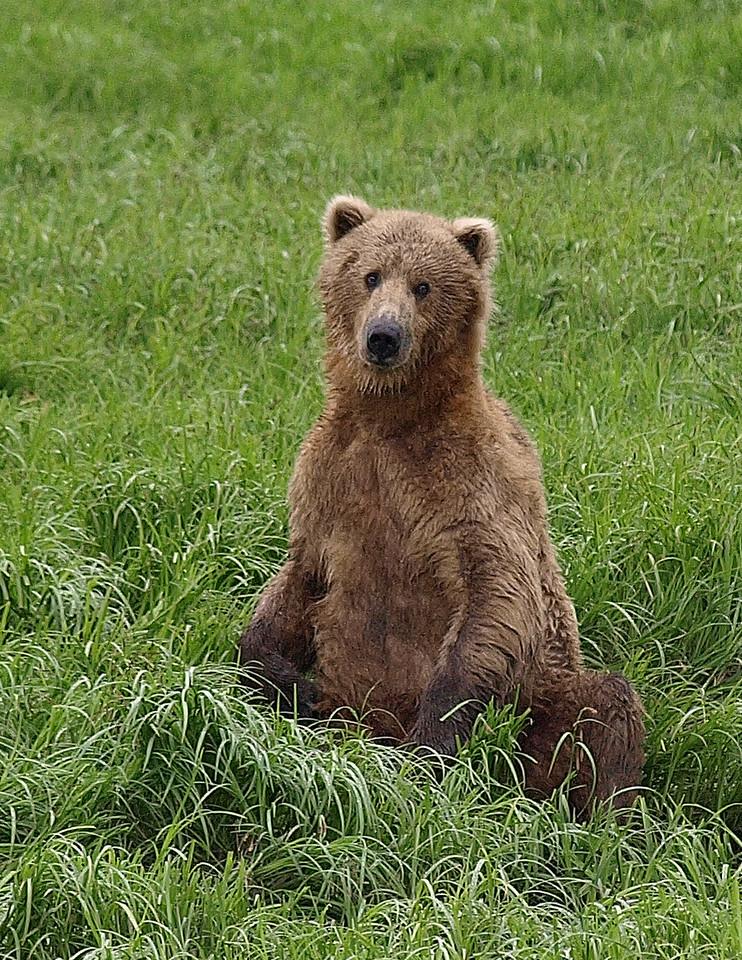 Randy J's bear.