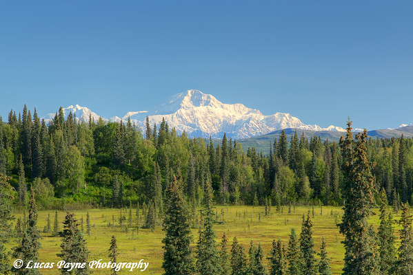 Scenic view of the Southside of Mt. McKinley (Denali) from the Petersville Road, Southcentral Alaska.<br /> <br /> July 30, 2014