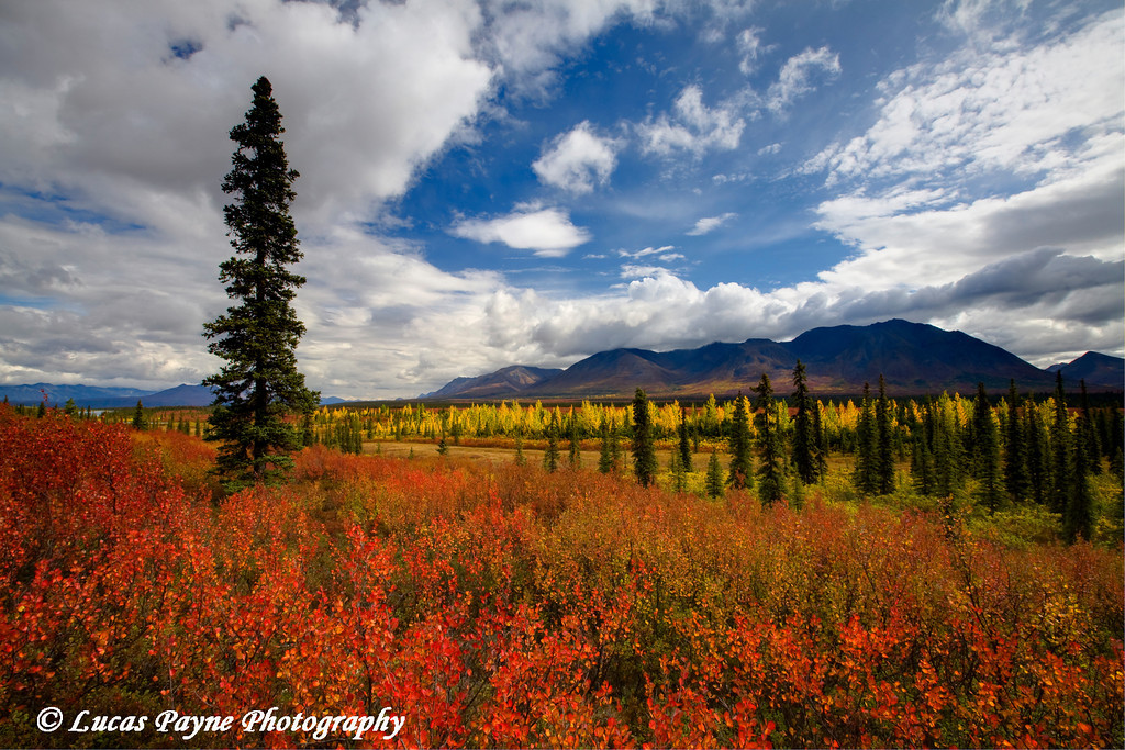 Fall colors along the George Parks Highway near Cantwell<br /> September 01, 2010