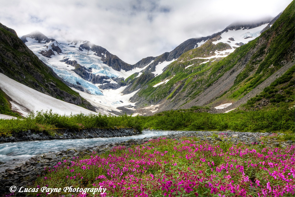 """""""River Beauty"""" flowers and Byron Glacier.<br /> August 02, 2010"""