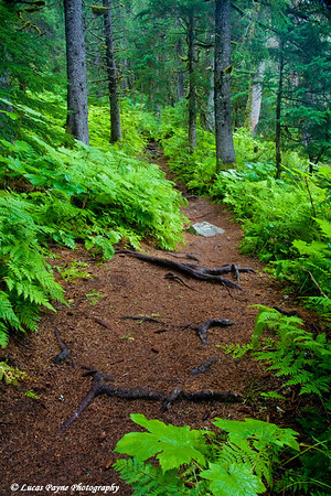 Virgin Creek Falls Trail near Girdwood, Alaska<br /> August 15, 2009