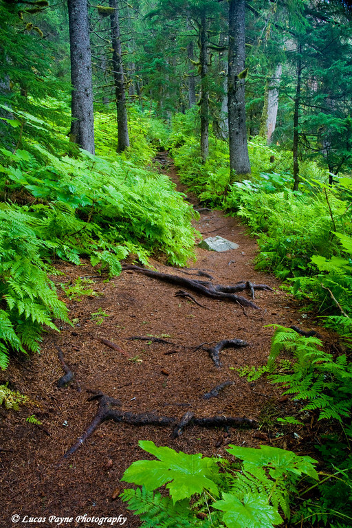 Virgin Creek Falls Trail near Girdwood, Alaska<br /> August 15, 2009