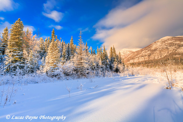Winter sunlight along Skilak Lake Road on the Kenai Peninsula.<br /> HDR<br /> January 22, 2011