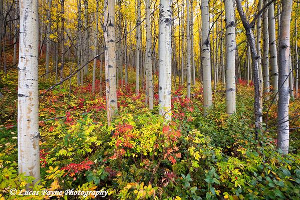 Autumn Forest.<br /> September 08, 2010