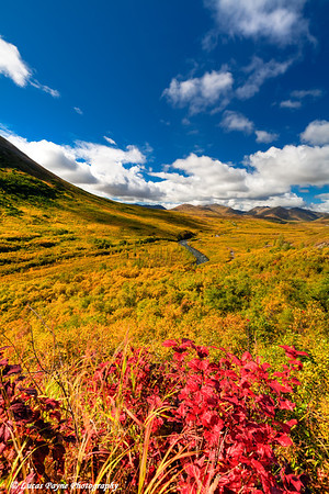 Fall foliage in the Peters Hills along the Petersville Road<br /> HDR<br /> September 01, 2011