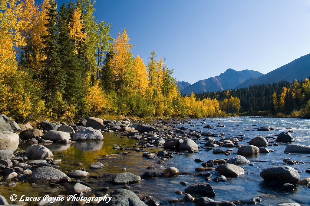 Fall colors along a stream near the Parks Highway in Alaska.<br /> September 05, 2009