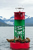 Steller Sea Lions resting on a channel marker in Lynn Canal, Southeast Alaska.<br /> <br /> July 03, 2014