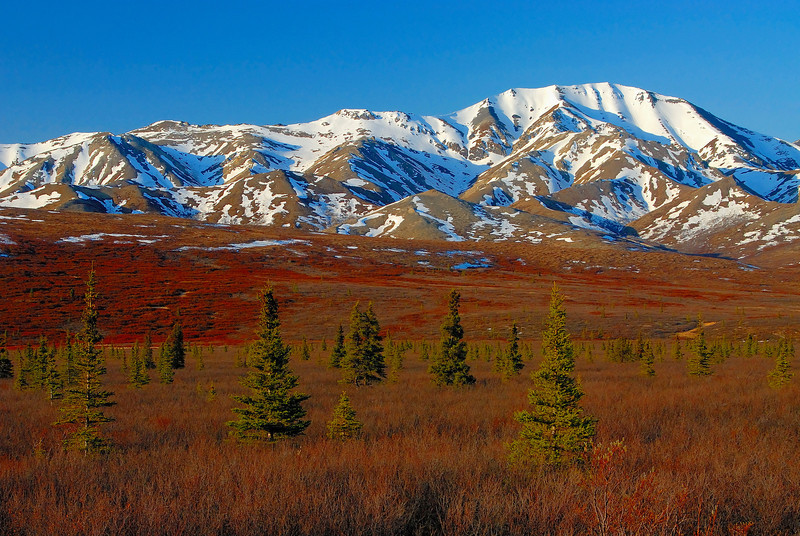Springtime in the eastern foothills of Denali.