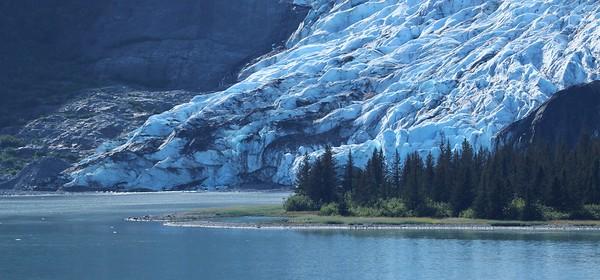 Glacial Trees