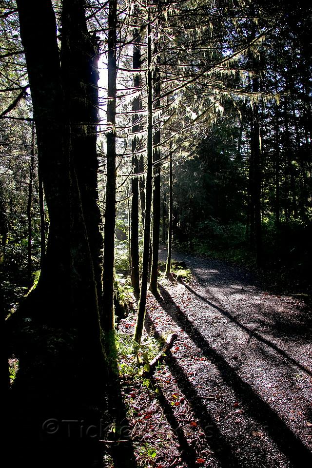 Morning Walk in Sitka Historic Park