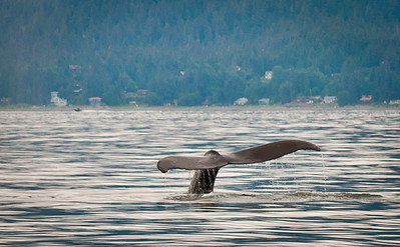 Alaska & the Northwest