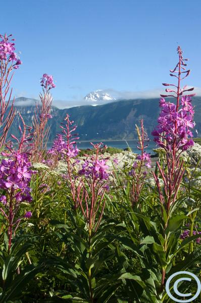 Alaska July 2005 1/ 40s, at f/24 || E.Comp:0 || 29mm || WB: AUTO 0. || ISO: 400 || Tone: AUTO || Sharp: AUTO || Camera: NIKON D2Hon: 2005:07:23 09:02:23