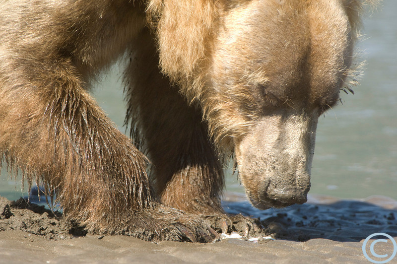 Alaska July 2007 1/ 320s, at f/6.7 || E.Comp:0 || 500mm || WB: AUTO 0. || ISO: 400 || Tone: AUTO || Sharp: AUTO || Camera: NIKON D2Xon: 2007:07:16 22:58:02