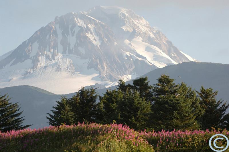 Alaska July 2005 1/ 1000s, at f/4 || E.Comp:0 || 200mm || WB: AUTO 0. || ISO: 400 || Tone: AUTO || Sharp: AUTO || Camera: NIKON D2Xon: 2005:07:23 07:24:52