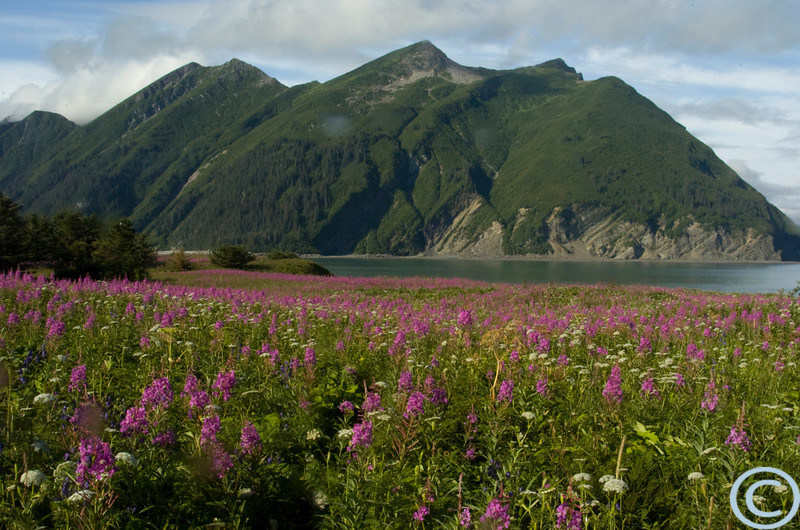 Alaska July 2005 1/ 80s, at f/22 || E.Comp:0 || 24mm || WB: AUTO 0. || ISO: 400 || Tone: AUTO || Sharp: AUTO || Camera: NIKON D2Hon: 2005:07:23 09:29:32
