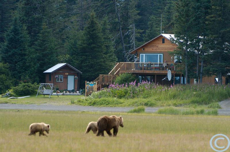 SSC Grizzly Bears 1/ 200s, at f/5.6 || E.Comp:0 || 280mm || WB: AUTO 0. || ISO: 200 || Tone: AUTO || Sharp: AUTO || Camera: NIKON D2Hon: 2004:07:24 19:31:53