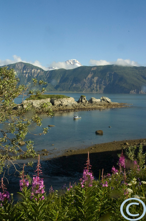 Gull Island Coastline on the Gulf of Alaska, showing the blooming fireweed, rocky outcroppings and Mt. Iliamna volcano.