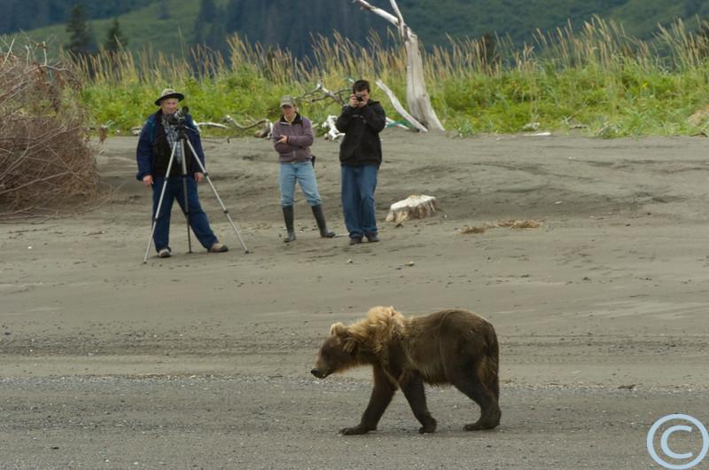 SSC Grizzly Bears 1/ 100s, at f/13 || E.Comp:0 || 360mm || WB: AUTO 0. || ISO: 400 || Tone: AUTO || Sharp: AUTO || Camera: NIKON D2Hon: 2004:07:25 15:27:21