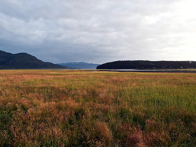 """In July you can really notice the color of the grass start to change, as with this photo of the Mendenhall Game Refuge. It's quite beautiful, and probably our best """"fall colors"""" even though true fall is still far away. July 16th, 2009."""