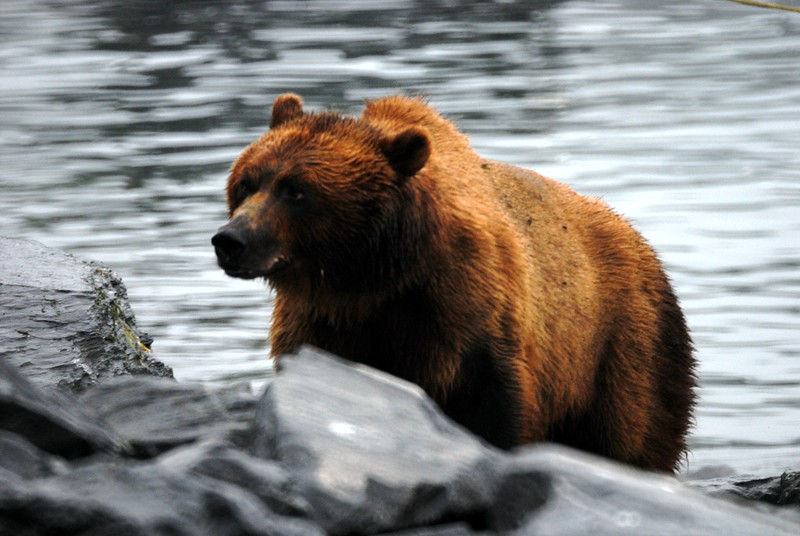 Don't touch my Salmon or cubs