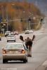 Bull Moose holding up traffic on Debarr Road in Anchorage, Alaska.<br /> October 03, 2010