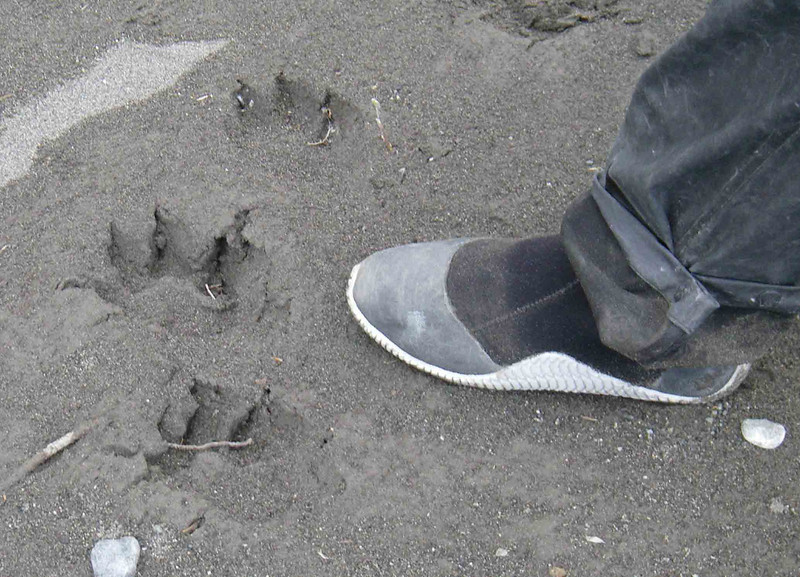 No campsite is complete without wolf tracks.