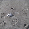 Or better yet, bear tracks.