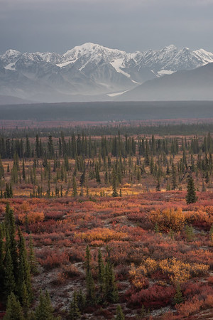 Denali Highway - Autumn