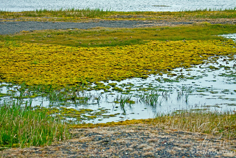 Colorful growth and grasses on the tundra outside Barrow, Alaska