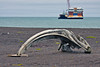Whale bone on the beach with container ship in the Arctic Ocean.