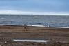 """A rusty treasure along the Arctic Ocean """"beach""""."""
