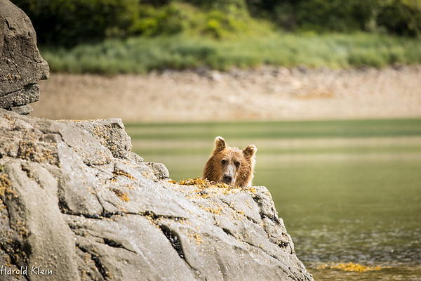 Katmai Bear Boat late July 2017