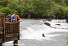Visitors viewing a Brown bear fishing for salmon from the observation platform at Brooks Falls in Katmai National Park & Preserve, Southwest Alaska.<br /> <br /> June 30, 2013