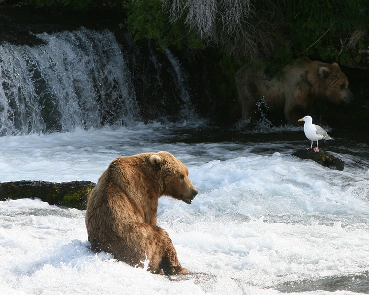 It's harder than it looks, sometimes a bear just has to sit & relax